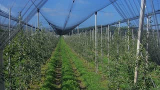 Aerial view: Orchard with netting