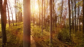 aerial view. trees forest silhouette. springtime. sun flare light. nature plants