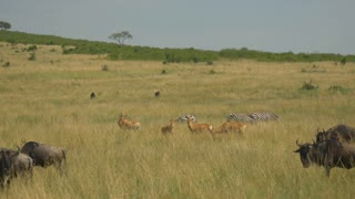 AERIAL: Wild animals in African safari