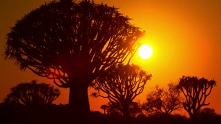 Africa Sunrise Time-Lapse Trees Dawn