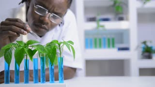 African American lab technician working with plants for environment