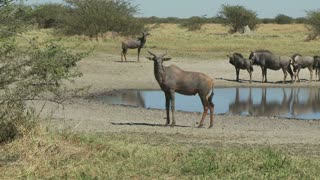 African Animals Near Watering Hole