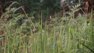 African Jungle Grasses Rack Focus