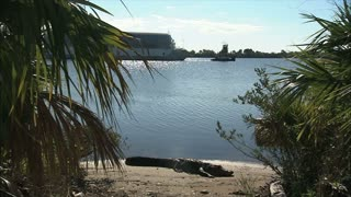 Alligator on Beach and  Barge Through Palm Trees