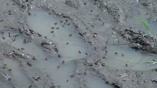 Amazon Village Flies In Mud And Water