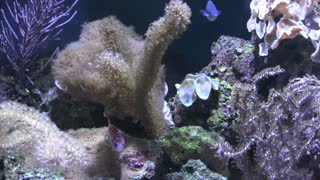 Aquarium fish and sea plants