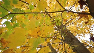 Around Autumn Tree Leaves
