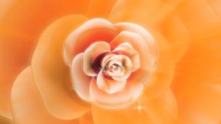 Por volta de flor com um brilho