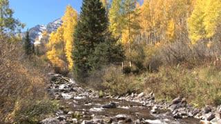 Aspen Autumn Scene