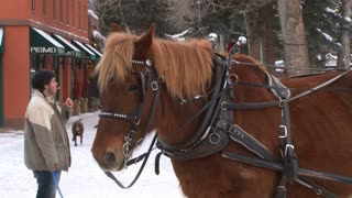 Aspen Horse Drawn Carriage