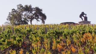 Autumn California Vineyard