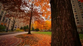 Autumn City Square Framed by Tree Trunk