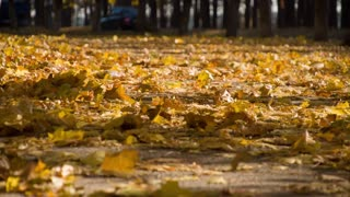 Autumn leaves with sun shining through and a little wind blowing. Slow motion. 4k DCI graded from RAW, UHD, Ultra HD resolution.