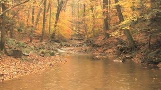 Autumn Scene Rain 2