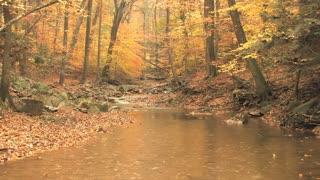 Autumn Scene Rain