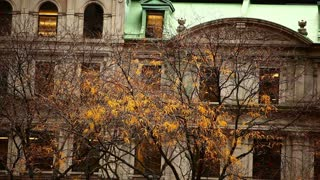 Autumn Trees in Front of City Building