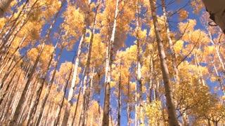 Autumn Trees Panning