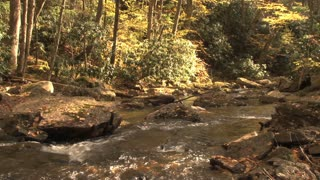 Babbling Brook In Woods