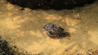 Baby Bird On Ground