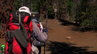 Backpackers Walking Forest Trail