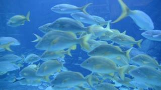 Bahamas Underwater Scene