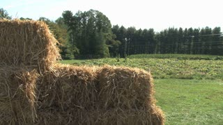Bales of Haw by Pumpkin Patch Pan Down