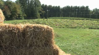 Bales of Hay by Pumpkin Patch 4