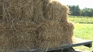 Bales of Hay by Pumpkin Patch 5