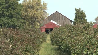 Barn and Orchard Zoom Out