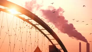 beautiful romantic background. birds swarm. slow motion. sunset. bridge. red sky