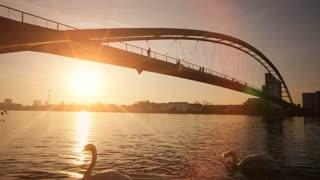 beautiful romantic sunset. dusk sun. swans swimming. bridge landscape. lake pond