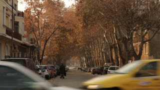 Beautiful Tree Lined Street in Romanian City