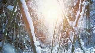 beautiful winter snow forest. trees woods nature. snow fall. slow motion