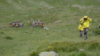 Beekeepers works in the apiary