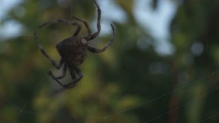 Big Spider in DanDong China 3