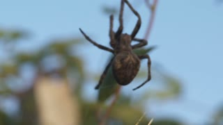 Big Spider in DanDong China 4