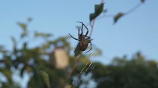 Big Spider in DanDong China
