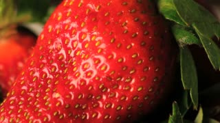 Big Strawberry Rotating Zoomed In