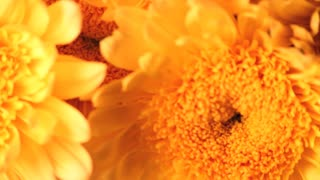 Big Yellow Flowers Close Up Spinning