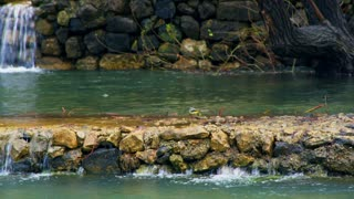 Bird On Rocks Near Small Waterfall