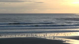 Birds Along Cannon Beach Shoreline