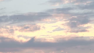 Birds and Airplanes Flying Through Bermuda Sky at Sunset