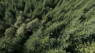 Birds-eye view of trees