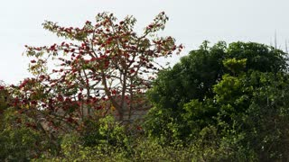 Birds In Tree With Red Leaves