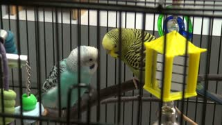 Birds Next To Each Other In Cage