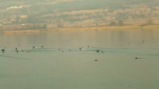 Birds Off Romanian Coast