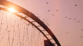 birds swarm. slow motion. beautiful romantic background. sunset. bridge. red sky