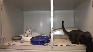 Black and White Cats in the Their Cages at Animal Shelter