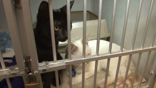 Black and White Cats Waiting For Home in Animal Shelter Cage