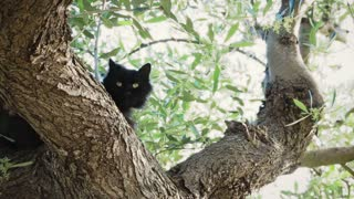Black cat on a tree